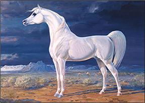 Arabian_Horse_Standard_wv-Border